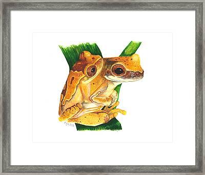 Hourglass Treefrog Framed Print