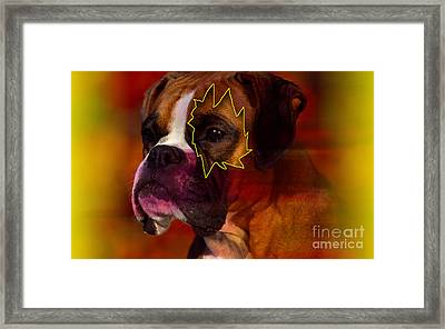 House Broken Boxer Painting Framed Print