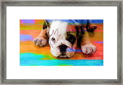 House Broken Bulldog Puppy Framed Print