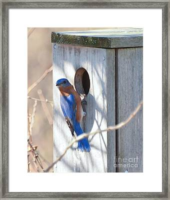 Framed Print featuring the photograph House Hunting by Kerri Farley