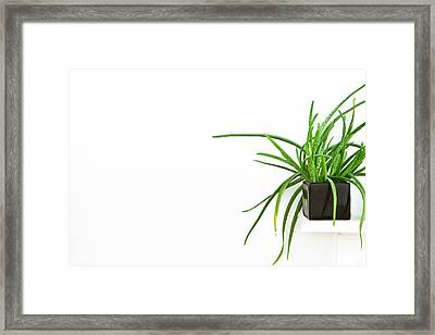 House Plant Framed Print by Tom Gowanlock