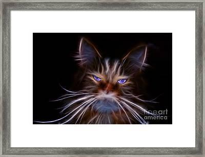 House Tiger Framed Print by Bruno Santoro