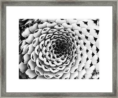 Houseleek Pattern Monochrome Framed Print by Tim Gainey
