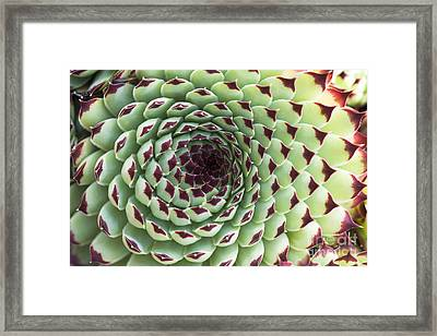 Houseleek Pattern Framed Print by Tim Gainey