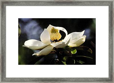 Houston Magnolia Framed Print