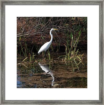 Houston Wildlife Great White Egret Framed Print by Joshua House