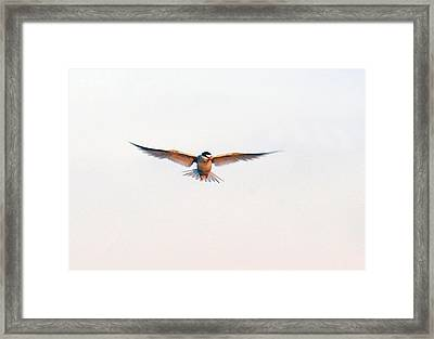Hover Framed Print by Barry Goble
