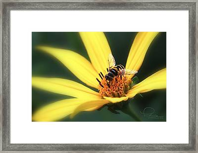 Framed Print featuring the photograph Hover Fly On Flower by Ludwig Keck