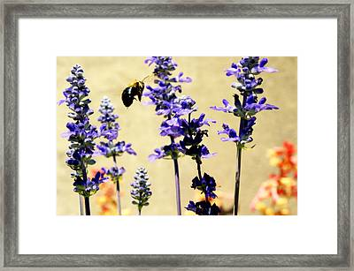 Hover Framed Print by Off The Beaten Path Photography - Andrew Alexander