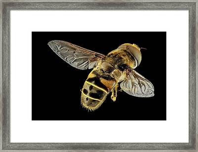 Hoverfly Framed Print by Us Geological Survey