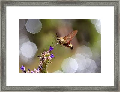 Hovering Pollination Framed Print