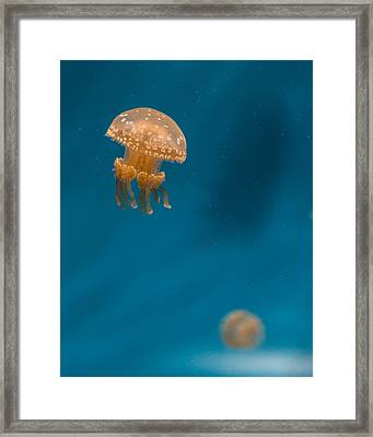 Hovering Spotted Jelly 3 Framed Print by Scott Campbell