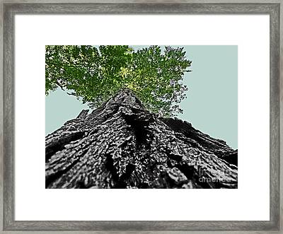 How A Chipmunk Sees A Tree Framed Print