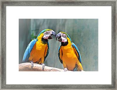 How About A Little Kiss Framed Print