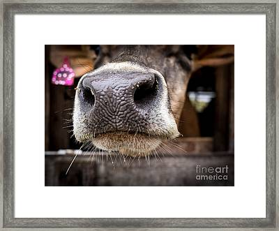 How About A Smack On The Lips? Framed Print