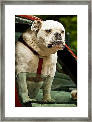How About Me Framed Print