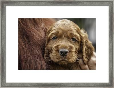 How Adorable? Framed Print