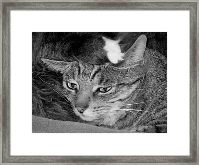 How Am I Going To Sleep Like This? Framed Print by Heidi Manly