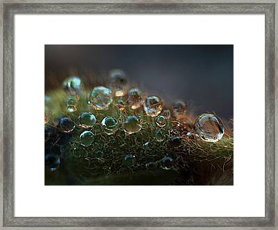 Framed Print featuring the photograph How  Bizzahh by Joe Schofield