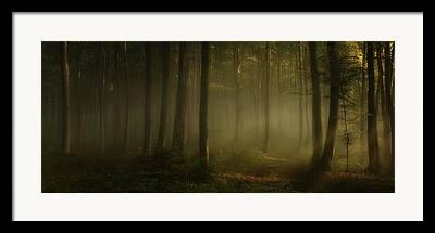 Awakening Framed Prints
