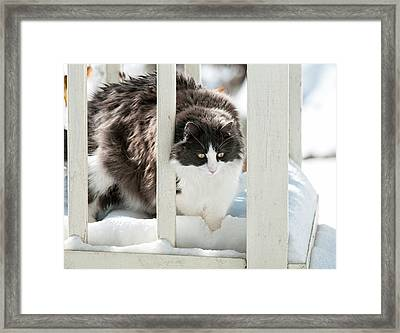 Framed Print featuring the photograph How Did This Happen? by Lara Ellis