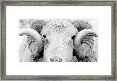Framed Print featuring the photograph How Ewe Doin by Courtney Webster