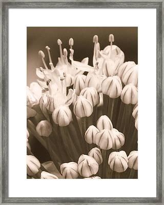 How Gumdrops Grow Framed Print by Tg Devore