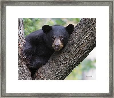How Is This Mr Camera Man Framed Print by Gerry Sibell