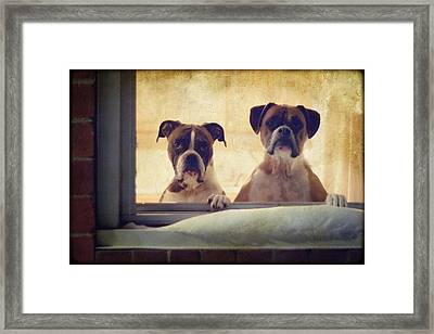 How Much Is That Doggie In The Window? Framed Print by Stephanie McDowell