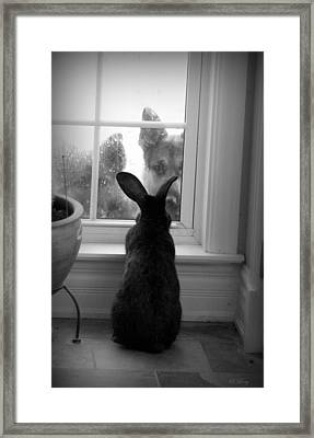 How Much Is The Doggie In The Window? Framed Print