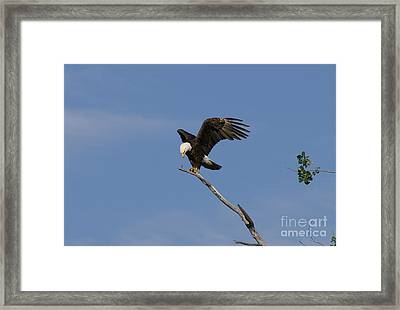 How My Claws Framed Print by Lori Tordsen