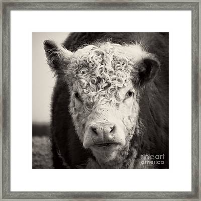 How Now Brown Cow Square Format Framed Print by Edward Fielding