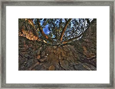 How Sweet It Is Framed Print by Michael Frank Jr