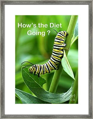 How The Diet Going Framed Print