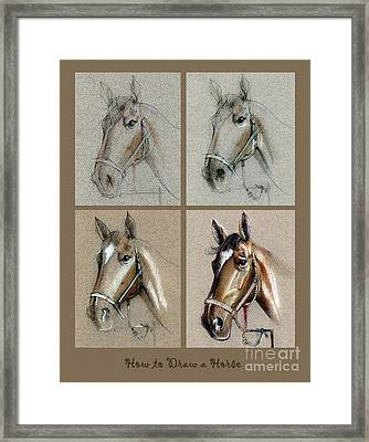 How To Draw A Horse Portrait Framed Print by Daliana Pacuraru