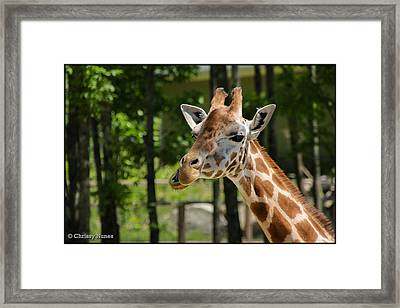 Howdy Framed Print by Christine Nunes
