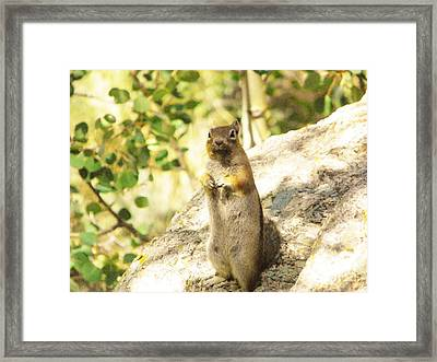 Howdy Framed Print by Michelle Bentham