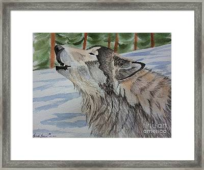 Howling Wolf In Winter Framed Print by Brenda Brown