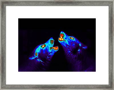 Howling Wolves, Scabies Research Framed Print by Science Source