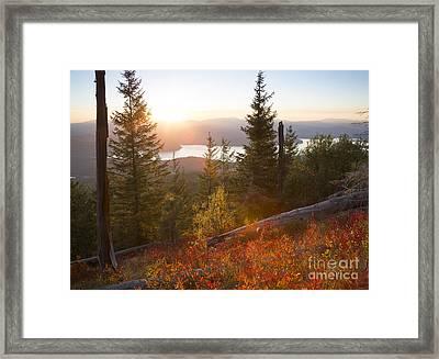 Huckleberry Blaze Framed Print by Idaho Scenic Images Linda Lantzy
