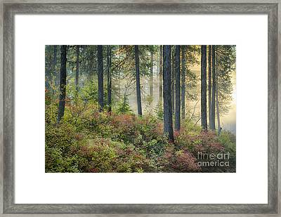 Huckleberry Patch Framed Print by Idaho Scenic Images Linda Lantzy