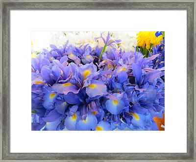 Huddling Iris Framed Print