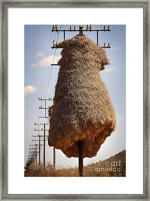 Huge Birds Nest On Pole Framed Print