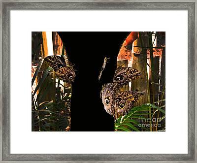 Huge Butterflies In Mindo Framed Print by Al Bourassa