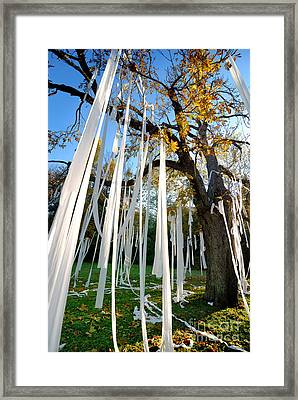 Huge Tree Covered In Toilet Paper Framed Print