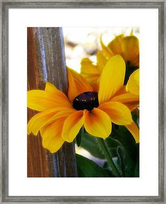 Hugging The Pole Framed Print