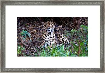 Hugo Waking 2 Framed Print