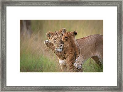 Hugs Framed Print