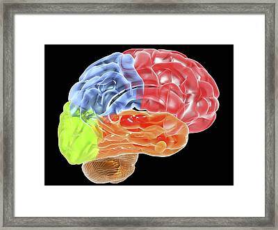 Human Brain Anatomy, Artwork Framed Print by Pasieka