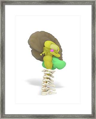 Human Brain And Limbic System Framed Print by Ramon Andrade 3dciencia